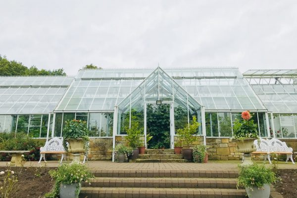 Greenhouse in August copy