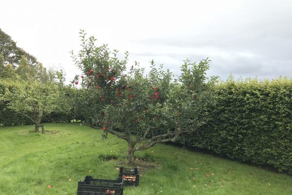 Apple Tree in Pet Cemetery