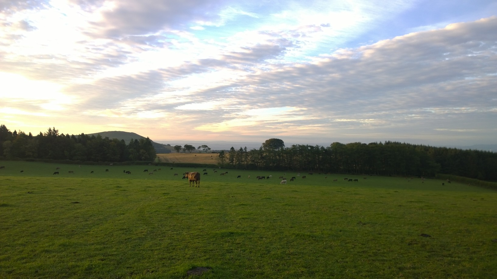 Teasses Estate; Cattle; Organic; Beef; Farm