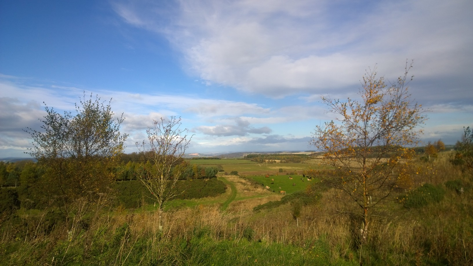 Teasses Estate; Farm; Organic; Beef; Scotland